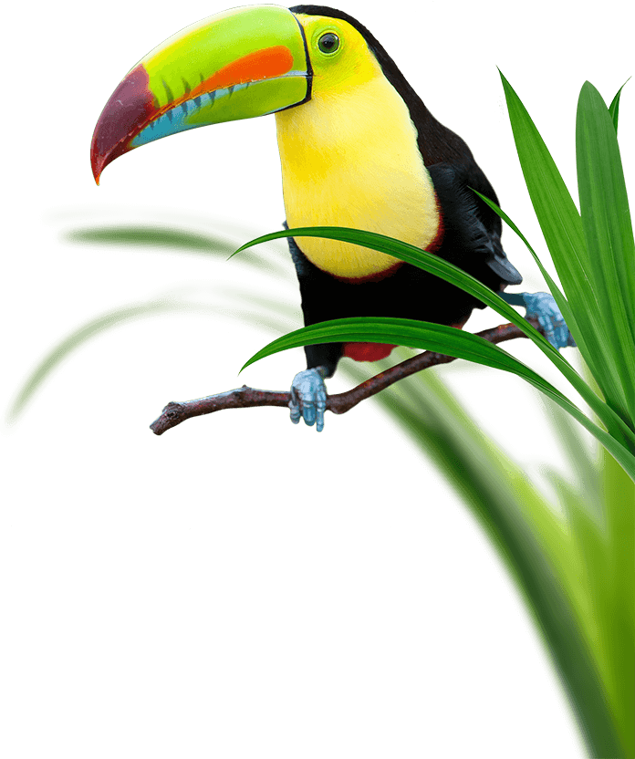 Toucan Perching Surrounded by Grass