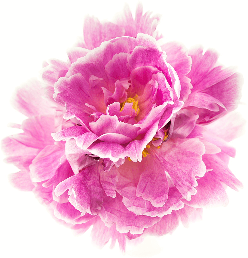 Feature Pink Flower