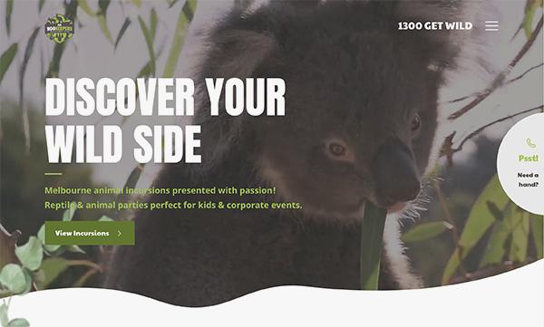 homepage header showing a koala